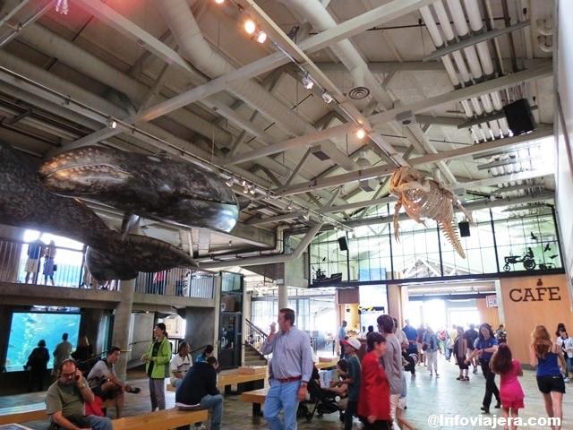 MontereyAquarium2