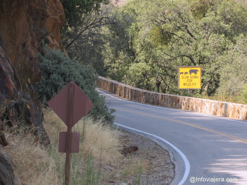 Sequoia8