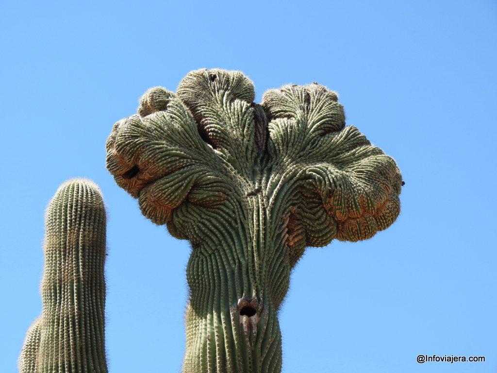 desert_botanical_garden_phoenix-1