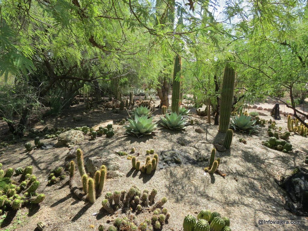 desert_botanical_garden_phoenix-7